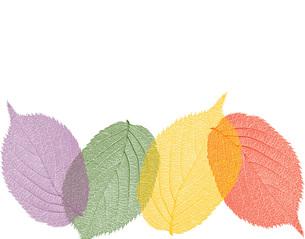 色づくの写真素材 [FYI00277553]