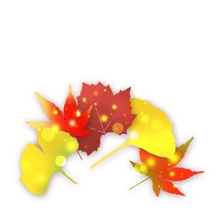 秋の写真素材 [FYI00277578]