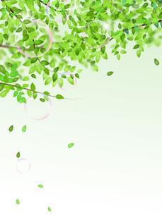 新緑の写真素材 [FYI00277656]