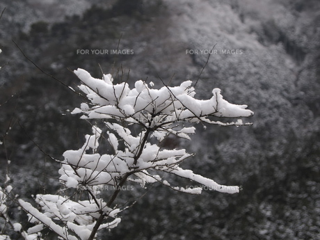 雪景色の写真素材 [FYI00277720]