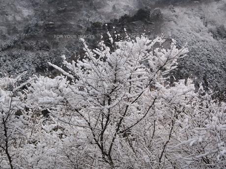 雪景色の写真素材 [FYI00277737]