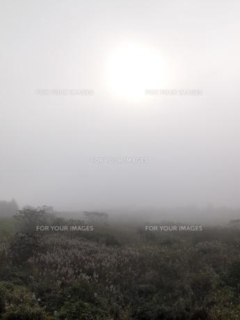 霧の素材 [FYI00277743]