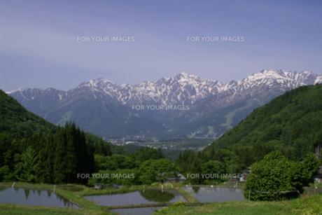 白馬連山を望む青鬼集落の田園風景の写真素材 [FYI00277859]