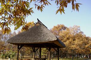 晩秋の川中島古戦場の木々とあずまやの写真素材 [FYI00277989]