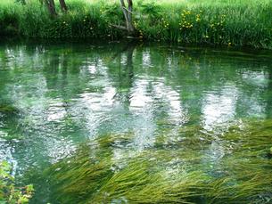 初夏の万水川の写真素材 [FYI00278059]