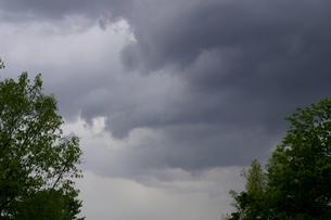 春の雨雲と新緑の木の写真素材 [FYI00278132]