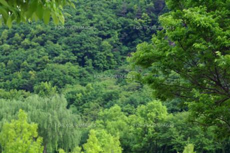 新緑いろいろの写真素材 [FYI00278258]