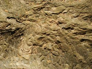 皺の寄った欅の樹皮の写真素材 [FYI00278317]