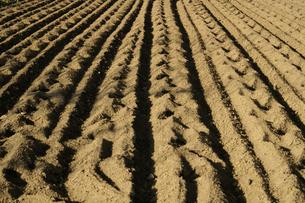 畑の土のオウトツの素材 [FYI00278322]