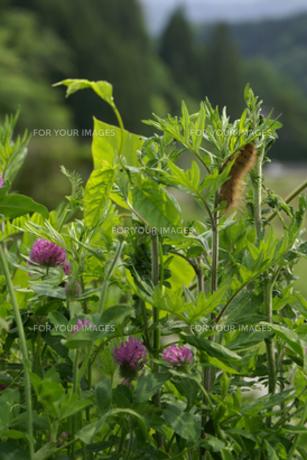 春の草花と毛虫の素材 [FYI00278355]
