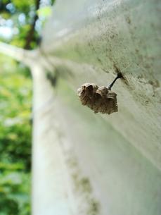 ガードレールに作られた小さなの蜂の巣 の写真素材 [FYI00278466]