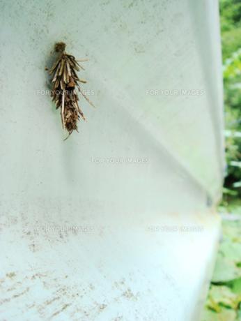 ガードレールに作られた蓑虫の蓑の写真素材 [FYI00278474]
