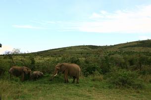 elephant 02の写真素材 [FYI00278518]