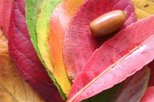 カラフルな落ち葉とどんぐりの写真素材 [FYI00278593]