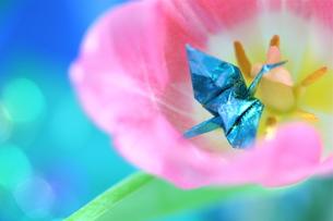チューリップと折り鶴(1)の素材 [FYI00278682]