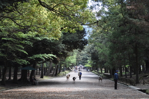 奈良公園の写真素材 [FYI00278710]