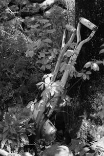 庭の風景の写真素材 [FYI00278727]