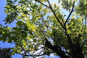 新緑の写真素材 [FYI00278736]