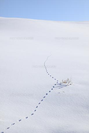 雪原の足跡の素材 [FYI00278765]