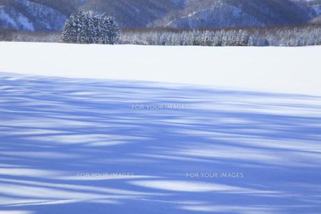 雪原の風景の素材 [FYI00278775]