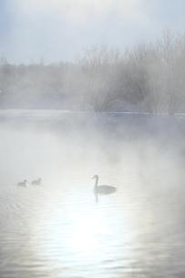 冬の水辺の写真素材 [FYI00278782]