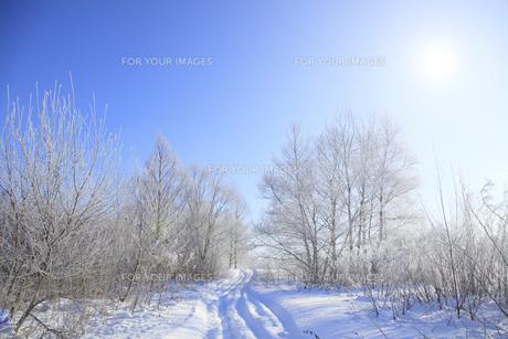 冬景色の素材 [FYI00278783]