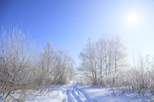 冬景色の写真素材 [FYI00278783]