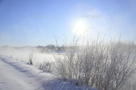 冬景色の素材 [FYI00278784]
