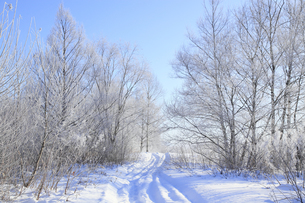 冬景色の写真素材 [FYI00278788]