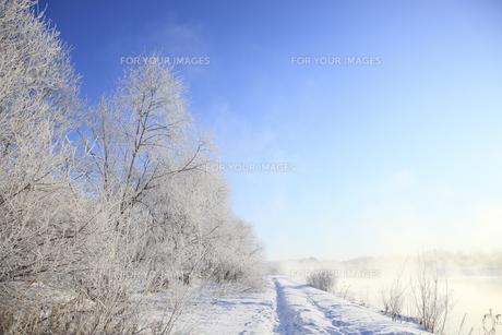 冬景色の素材 [FYI00278794]