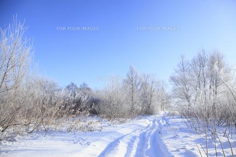 冬景色の素材 [FYI00278801]