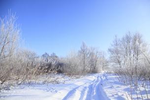 冬景色の写真素材 [FYI00278801]