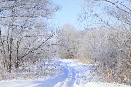 冬景色の素材 [FYI00278804]