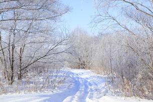 冬景色の写真素材 [FYI00278804]