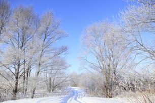 冬景色の素材 [FYI00278805]