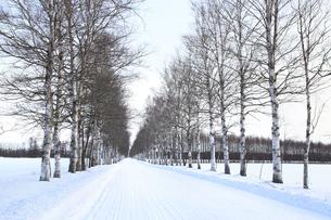 冬の並木道の写真素材 [FYI00278810]