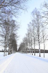 冬の並木道の写真素材 [FYI00278813]