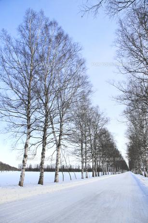 冬の並木道の写真素材 [FYI00278814]