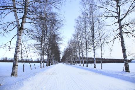冬の並木道の写真素材 [FYI00278820]