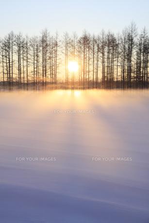 雪原の朝日の素材 [FYI00278825]