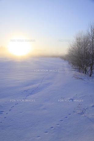 雪原の朝日の写真素材 [FYI00278831]