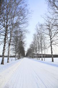 冬の並木道の写真素材 [FYI00278838]