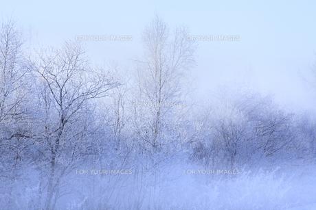 冬景色の素材 [FYI00278874]