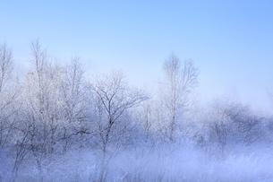 冬景色の素材 [FYI00278889]