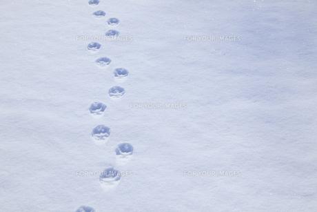 雪原の足跡の素材 [FYI00278939]