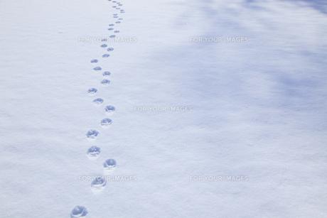 雪原の足跡の素材 [FYI00278949]