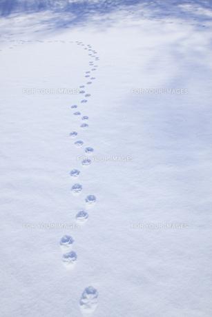 雪原の足跡の素材 [FYI00278957]