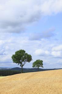 メルヘンの木の写真素材 [FYI00279038]
