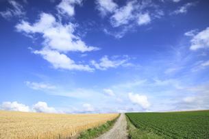 丘の風景の写真素材 [FYI00279084]