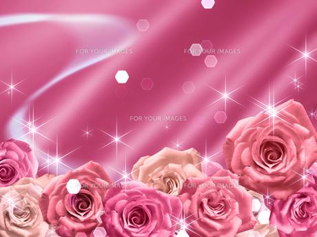 ピンクの薔薇の背景素材の素材 [FYI00279327]